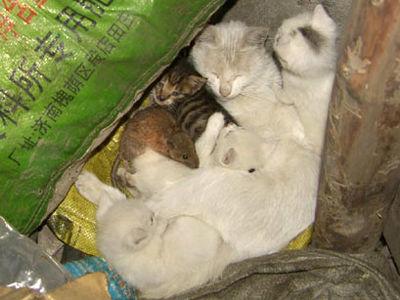 ネコの一家.jpg